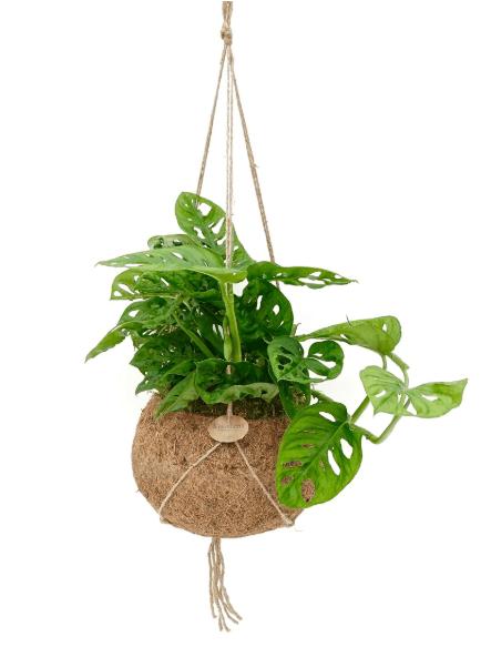 duurzame-planten