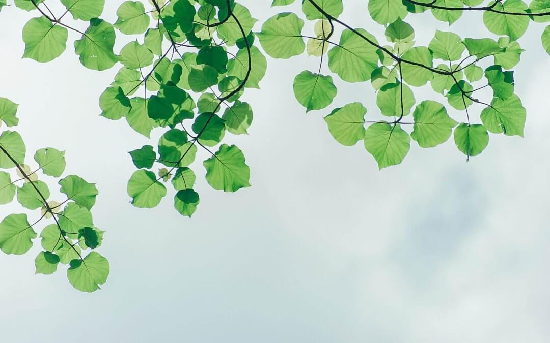 Handige tips om duurzamer te leven